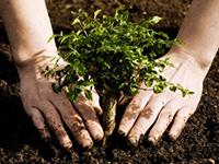 plantación árbol