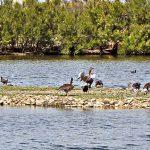 Aves en las Lagunas de Villafáfila.