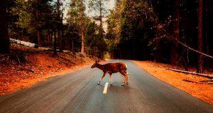 Crece el número de atropellos a animales en carretera