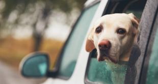Viajar con mascotas: todo lo que necesitas saber este verano